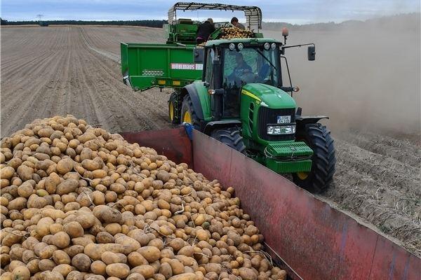 Proteingehalt Kartoffeln