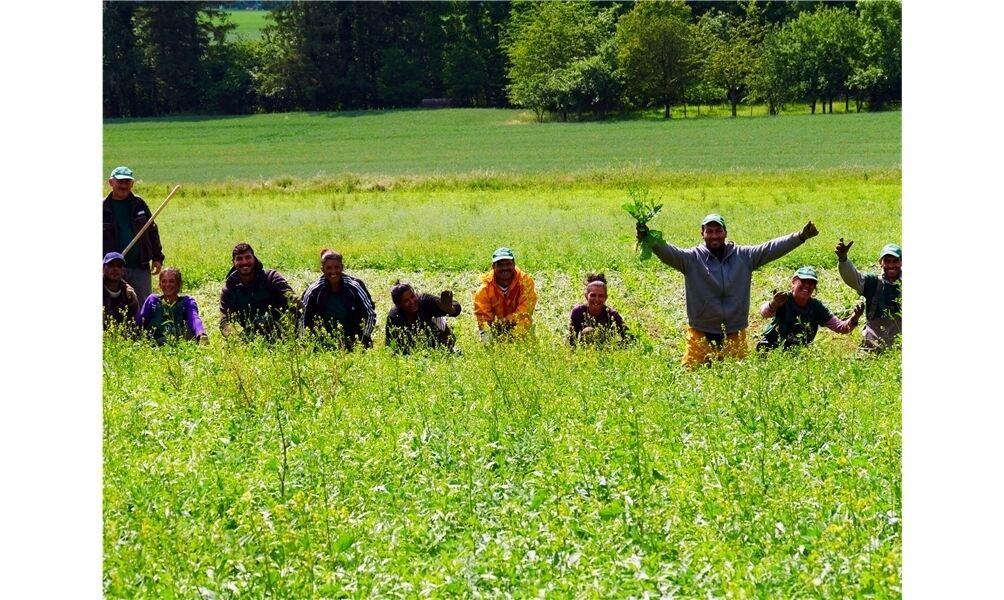 arbeiter für landwirtschaft gesucht
