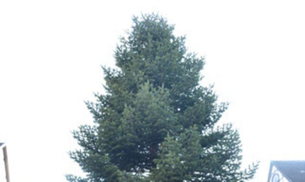 Der Baum steht – Adventszauber kann kommen