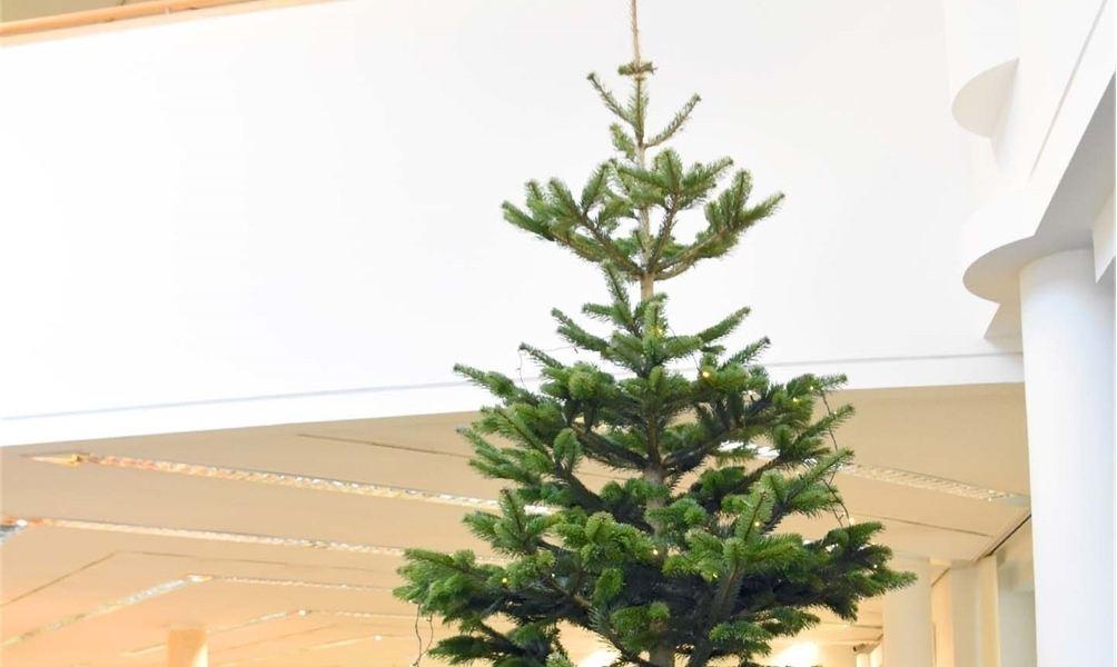 Wünsche kommen an den Weihnachtsbaum