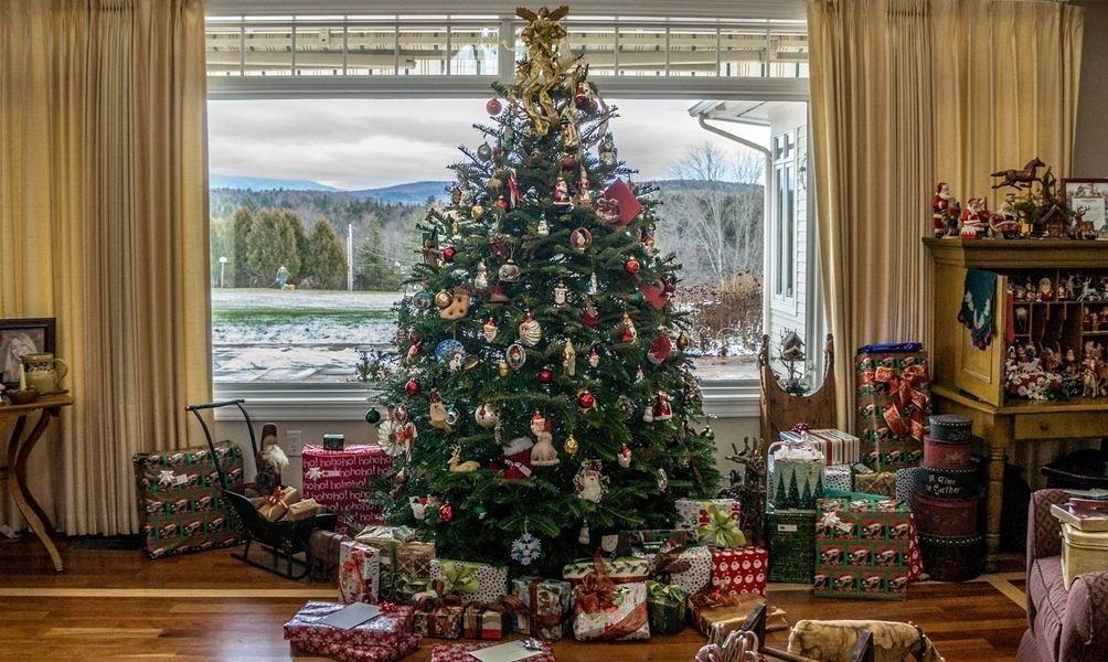 Weihnachtsbaum Explodiert.So Finden Sie Den Richtigen Weihnachtsbaum