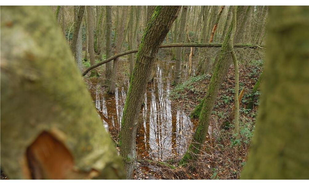"""Die """"Alte Tongrube Borstel"""" ist bekannt geworden durch das von der EU geförderte Gelbbauchunkenprojekt. Foto: rnk"""